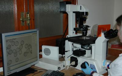 Un equipo de investigadores de la Estación Experimental de Aula Dei (EEAD‐CSIC) trabaja en la mejora genética  del  trigo  panadero  con el  objetivo  de aumentar la eficiencia en su producción